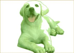 un perro verde